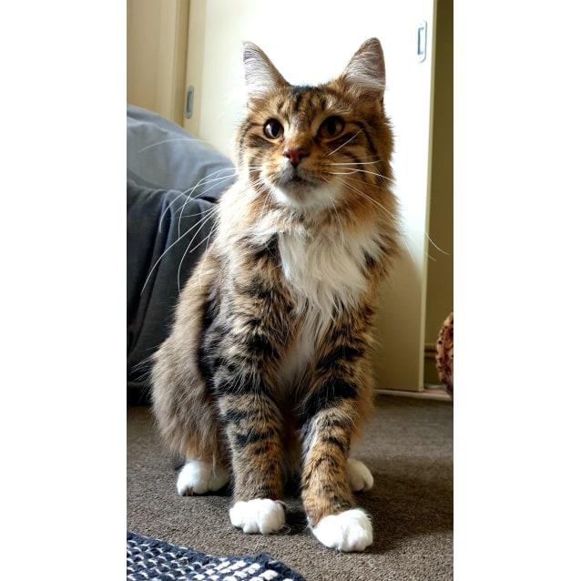 Photo of Harley. Sweet Gentle Floofer
