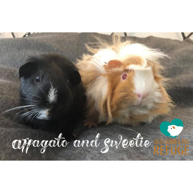 Photo of Affogato (Desexed Male) And Sweetie