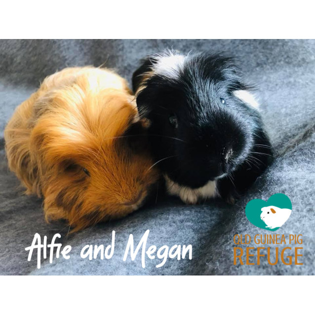 Photo of Alfie (Desexed Male) And Megan