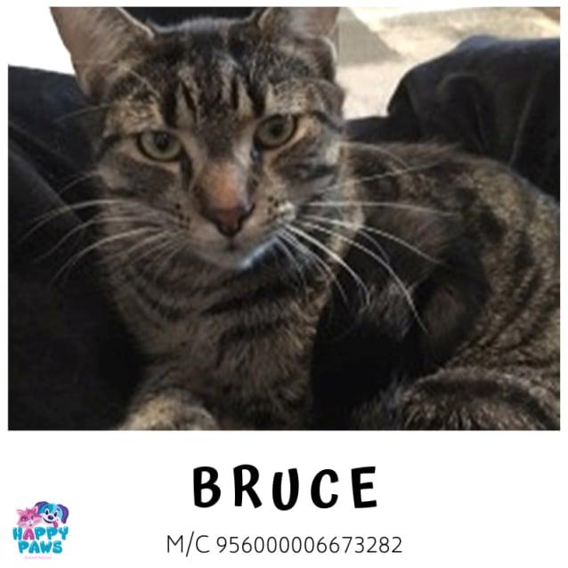Photo of Bruce