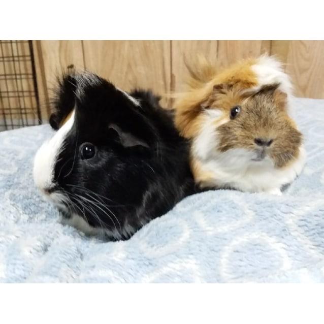 Photo of Leroy And Lana