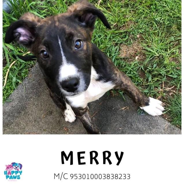Photo of Merry
