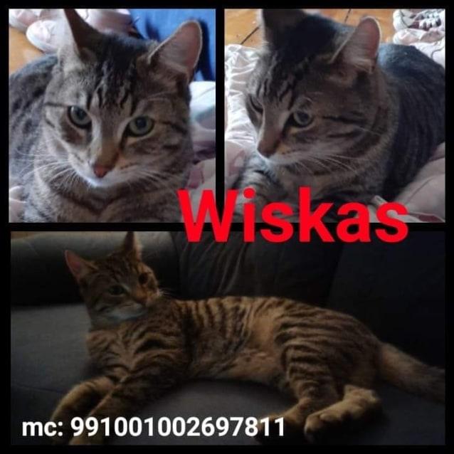 Photo of Wiskas