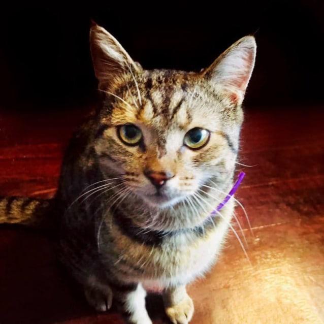 Photo of 1313   Jack Cat