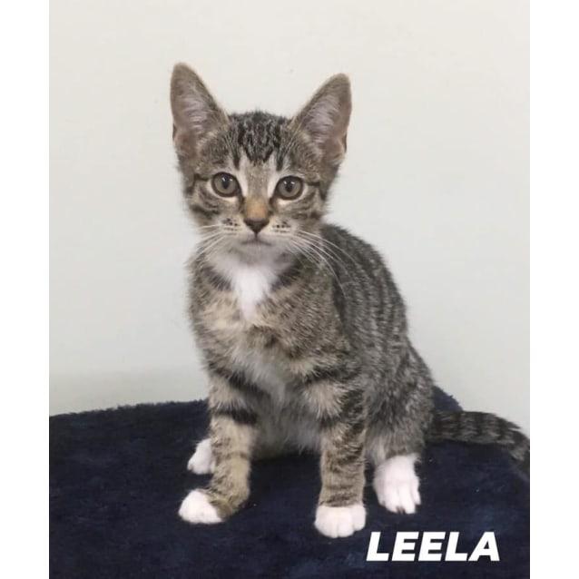 Photo of Leela