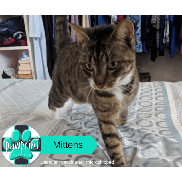 Photo of Mittens