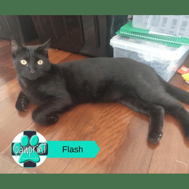Photo of Flash