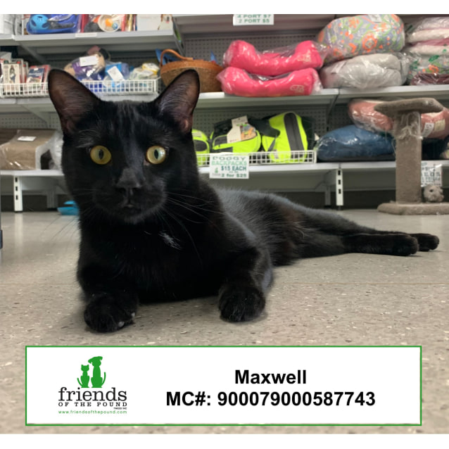 Photo of Maxwell