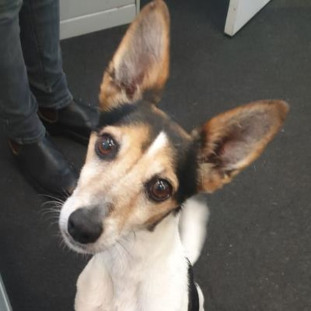 Photo of Baxter 927822