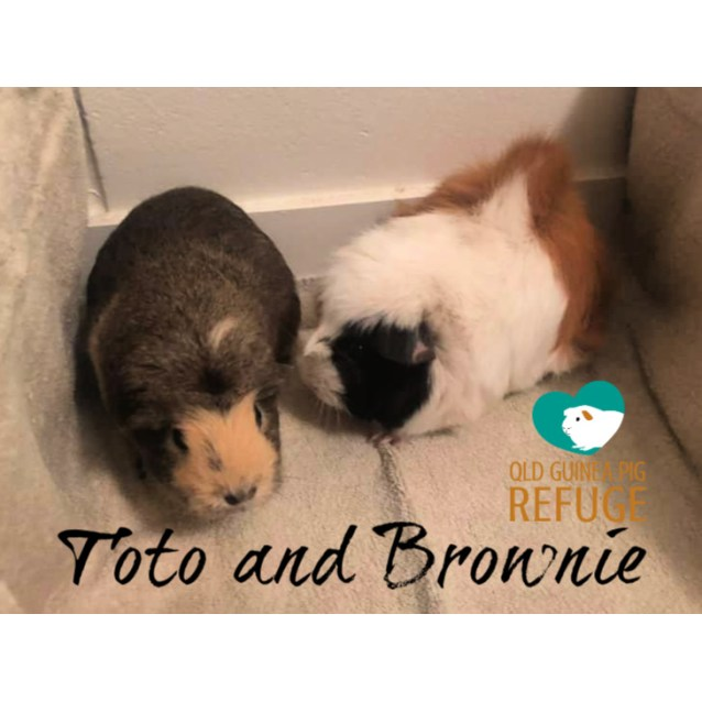 Photo of Toto And Brownie