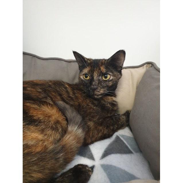 Photo of Swifty