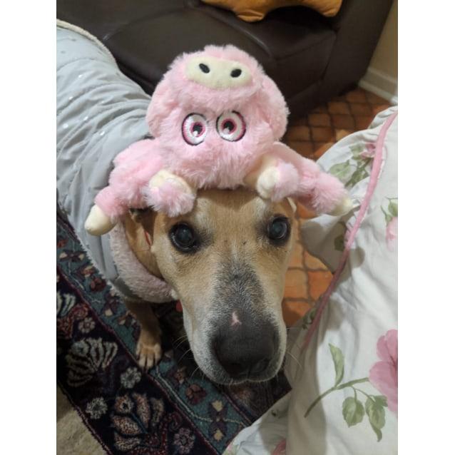 Photo of Saige