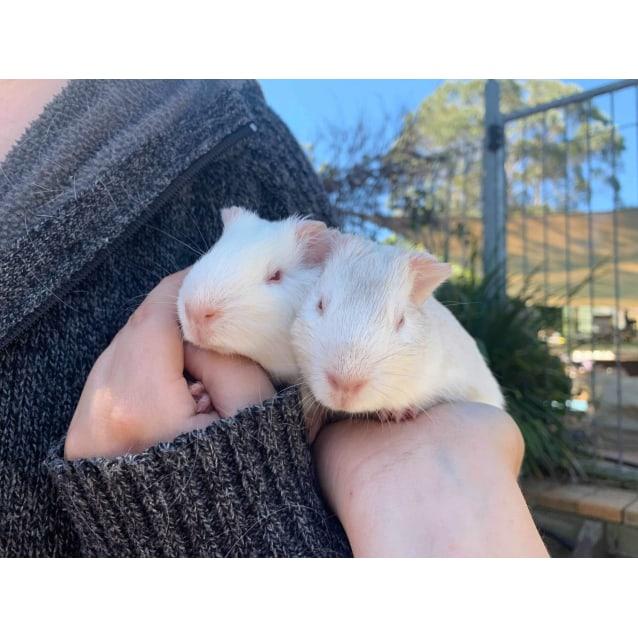 Photo of Sue & Sally