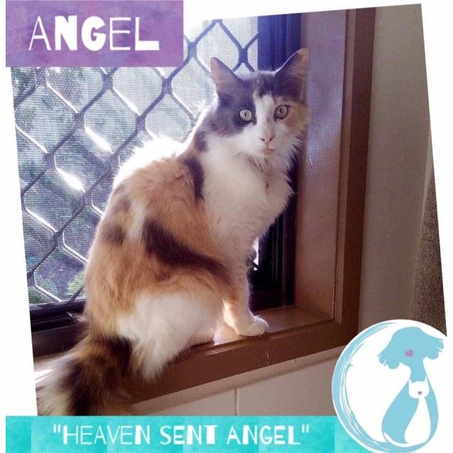 Photo of Angel