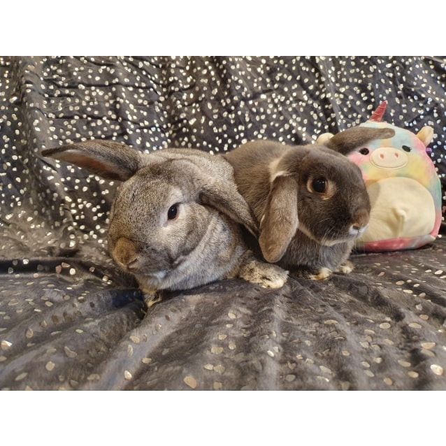 Photo of Agnes And Monty