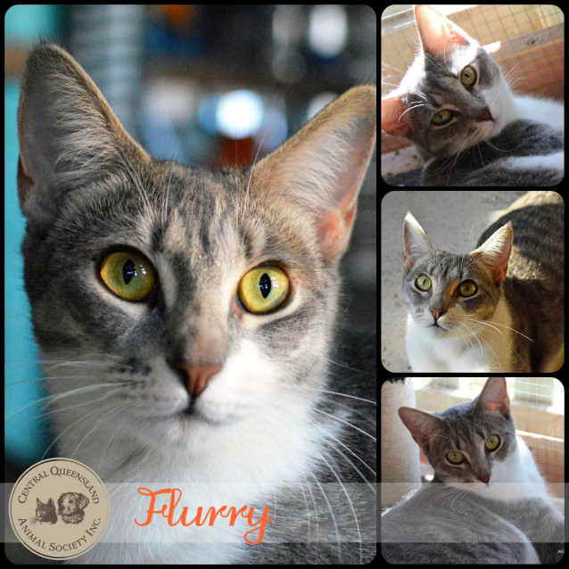 Photo of Flurry