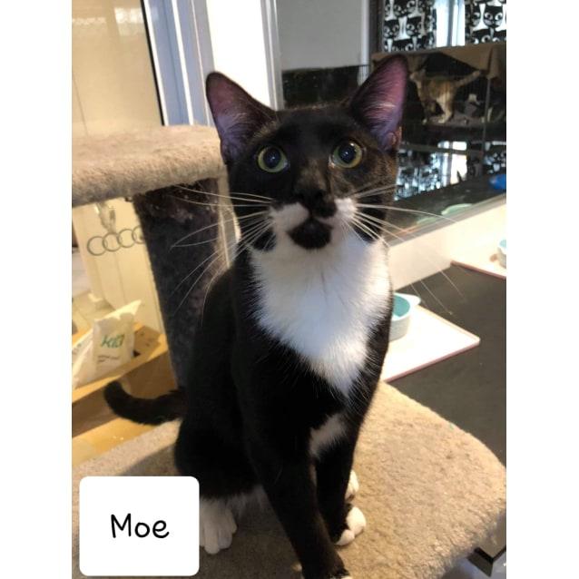 Photo of Moe
