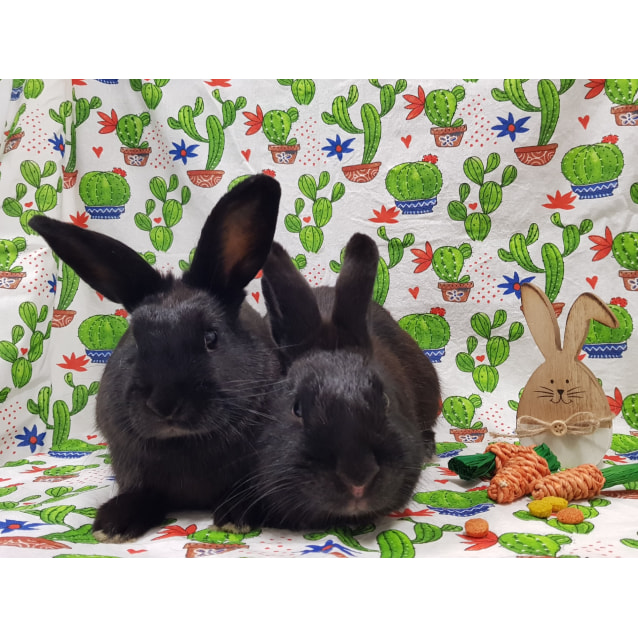Photo of Peter Rabbit 2nd & Cottontail