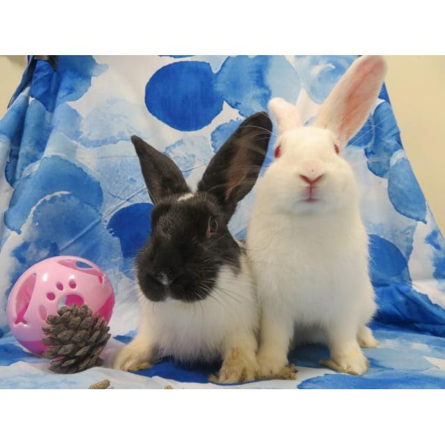 Photo of Hector & Harmony
