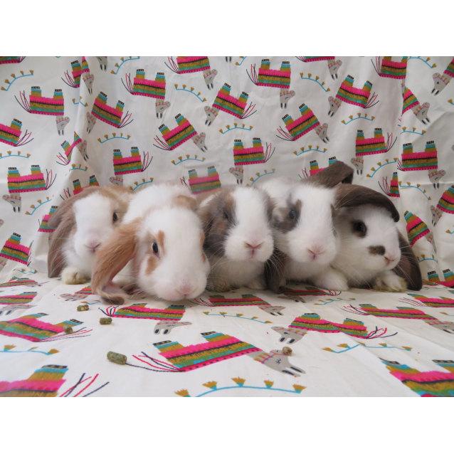 Photo of Missy's Babies