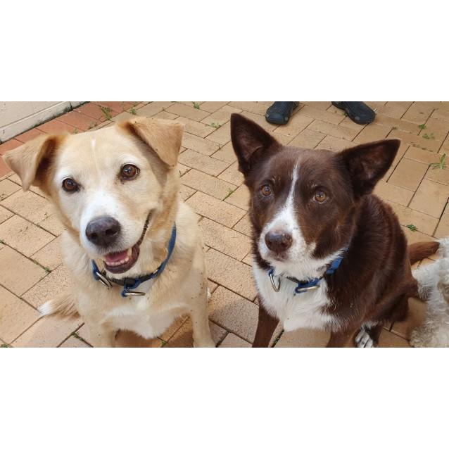Photo of Meeko And Daisy