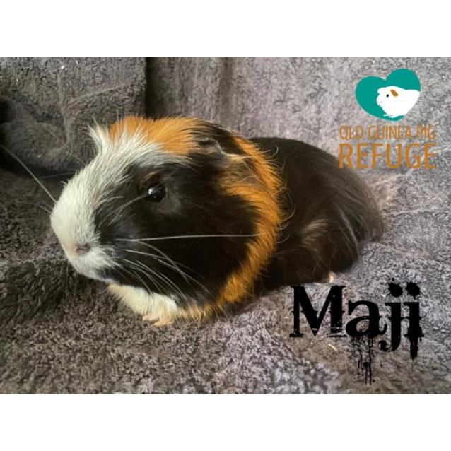 Photo of Maji