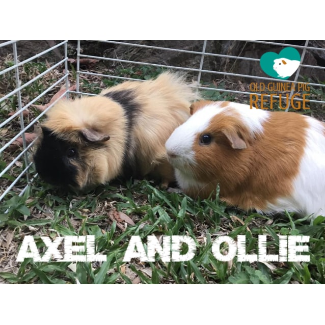 Photo of Axel And Ollie