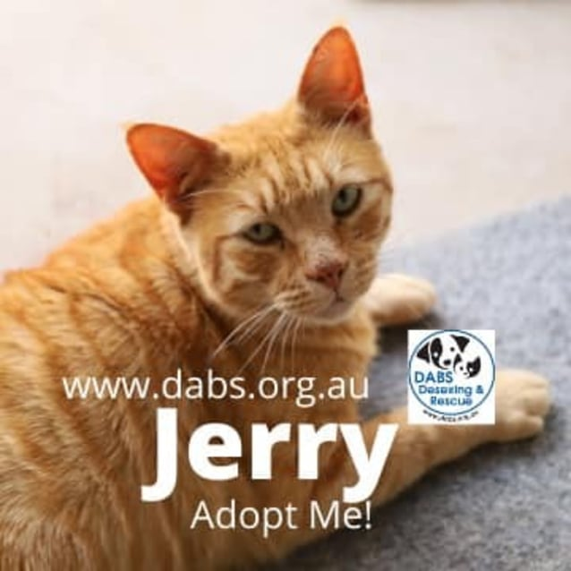 Photo of Jerry
