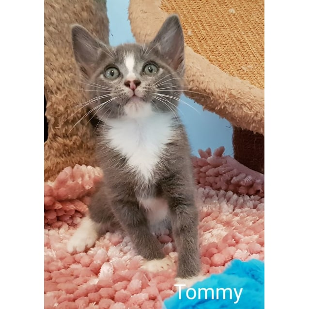 Photo of Tommy