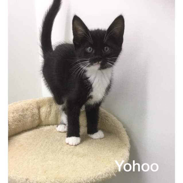 Photo of Yohoo