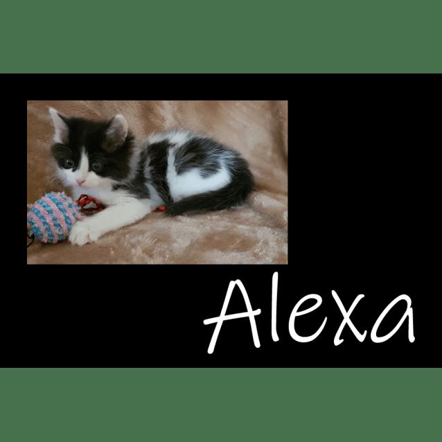 Photo of Alexa