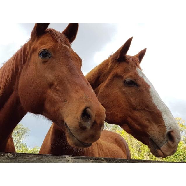 Photo of Companion Horses