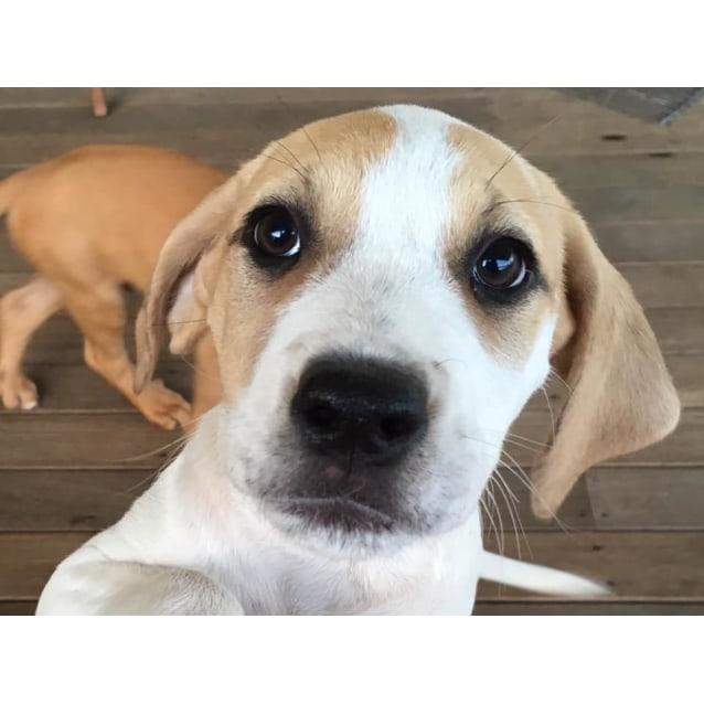 Photo of Piper