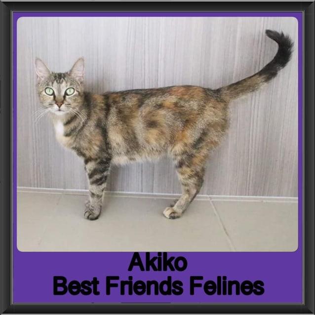 Photo of Akiko