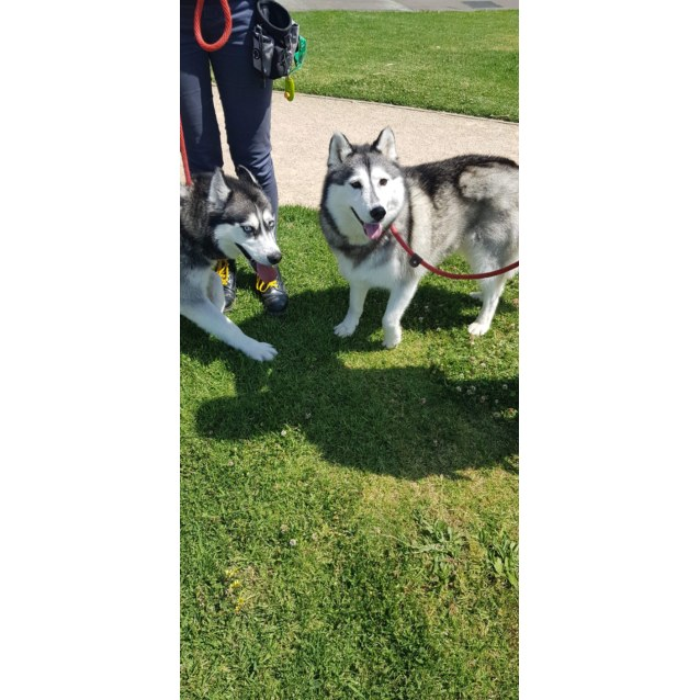 Photo of Meeko And Eski