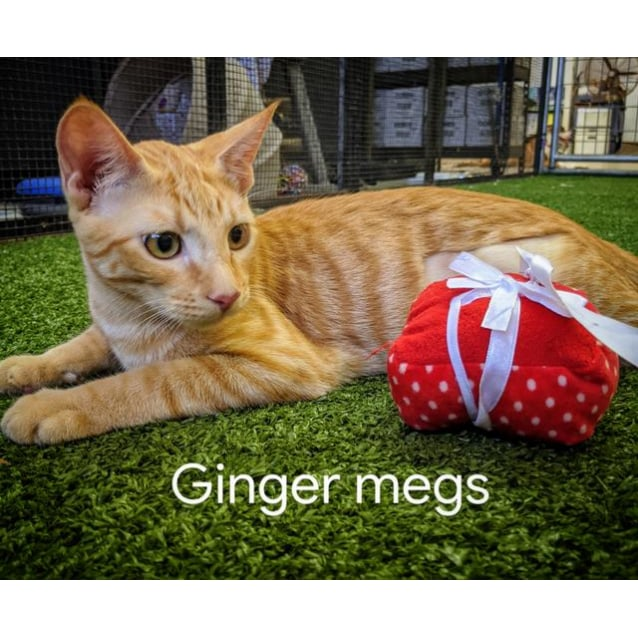 Photo of Ginger Megs