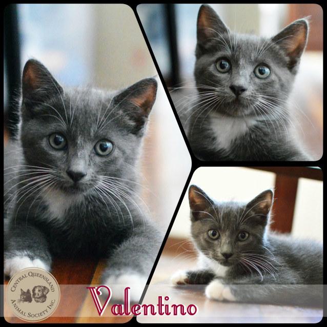 Photo of Valentino