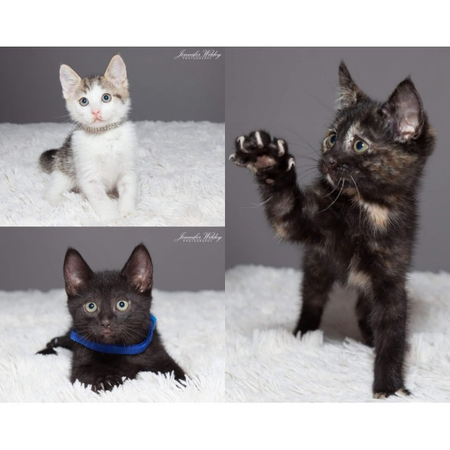 Photo of 1716/1717/1718/1719   Meowly Cyrus And Co