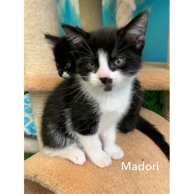 Photo of Madori
