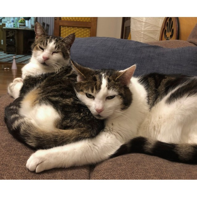 Photo of Lily & Henry  Located In Preston