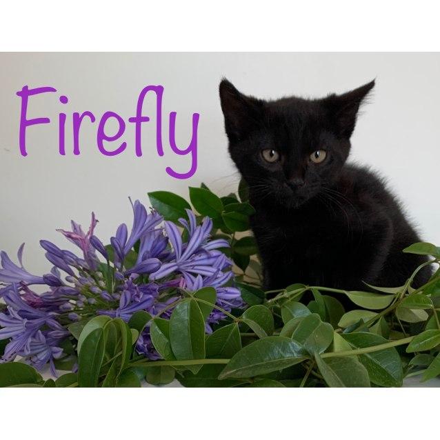 Photo of Enchanted Garden Rescue Kittens