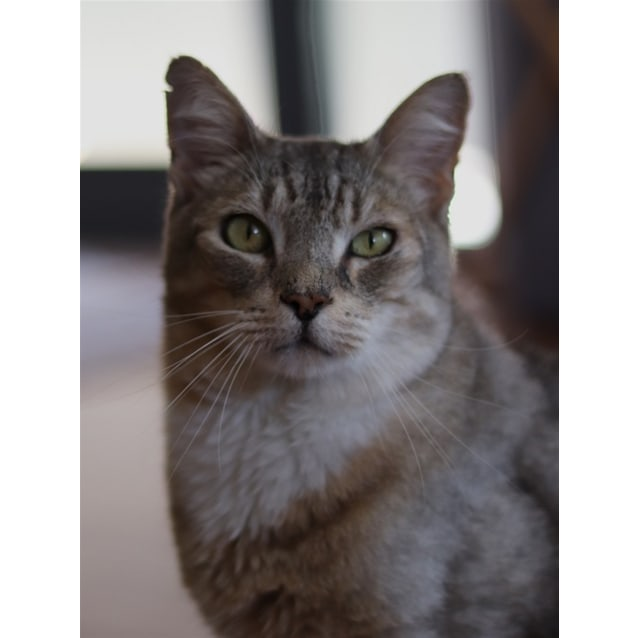 Photo of Frisco