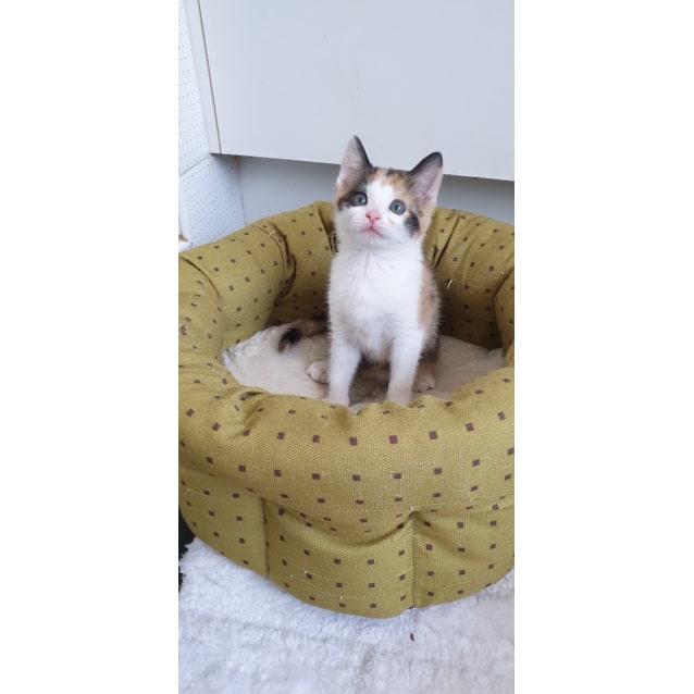 Photo of Feta