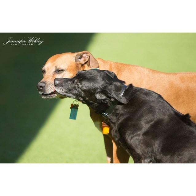 Photo of Shilo Dl2098 & Rocky Dl2099