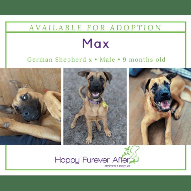 Photo of Max