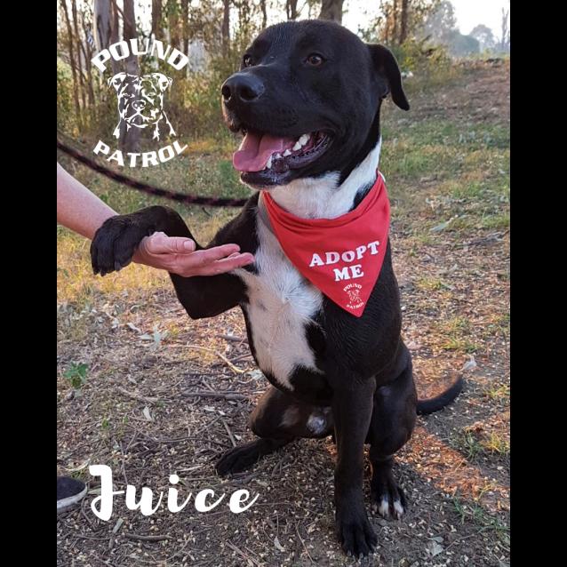 Photo of Juicy