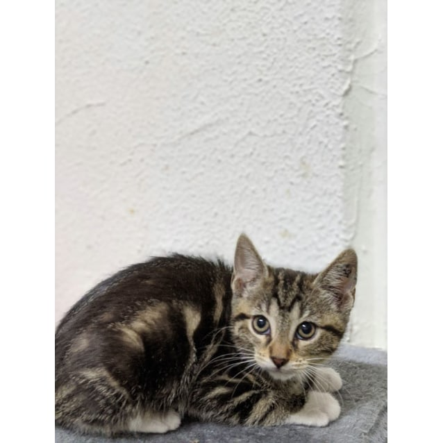 Photo of Smiggle