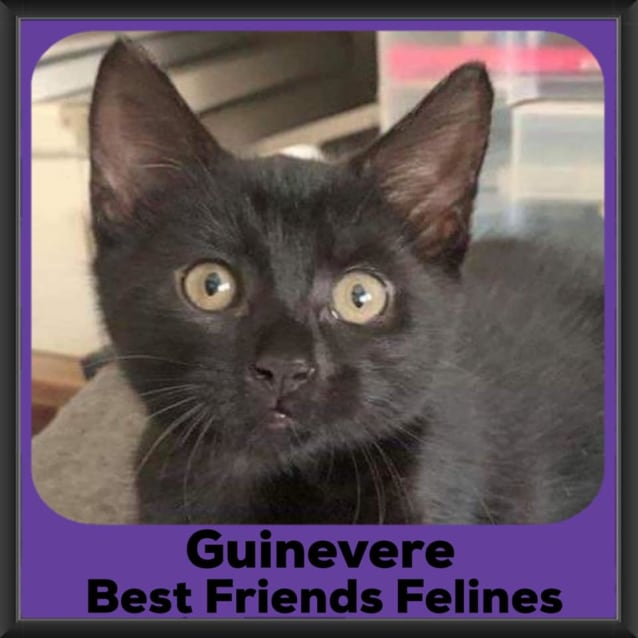 Photo of Guinevere