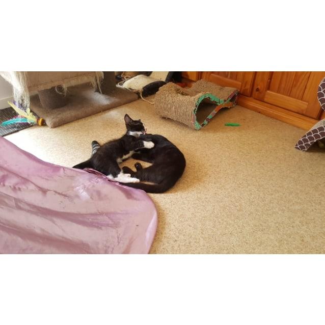 Photo of Satee & Boo (Dual Adoption)