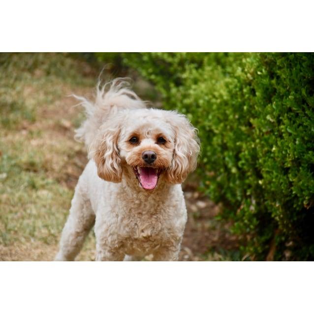 Photo of Layla